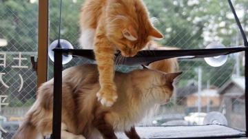 窓に張り付く猫ハンモック! その5 3