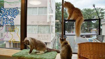 窓に張り付く猫ハンモック! その5 4