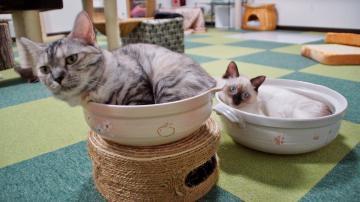 ダブル猫鍋! 1