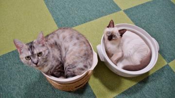 ダブル猫鍋! 2