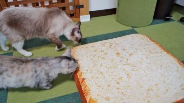 大きいなトーストクッション! 前編 4