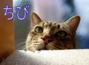 猫柳るみ子