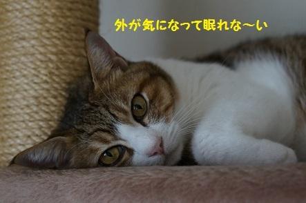 20170921181327ca4.jpg