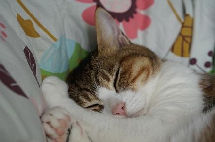 寝る猫は・・・・太る