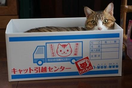 箱入り猫娘は 持ち運びはしやすい