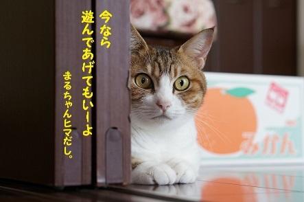 アタシ遊んであげる猫。アナタ遊んでもらうヒト。