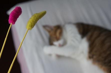 し~た(下)から持って来た~ぜ 猫じゃらし~♪