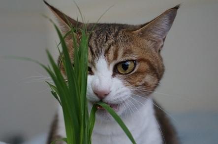 独眼猫まっこちゃん
