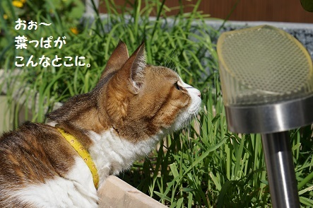 おぉ~葉っぱちゃん