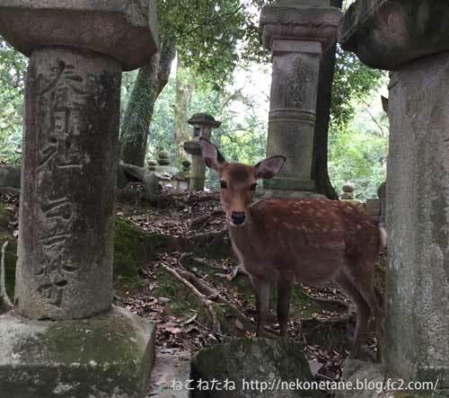 春日大社の鹿さん