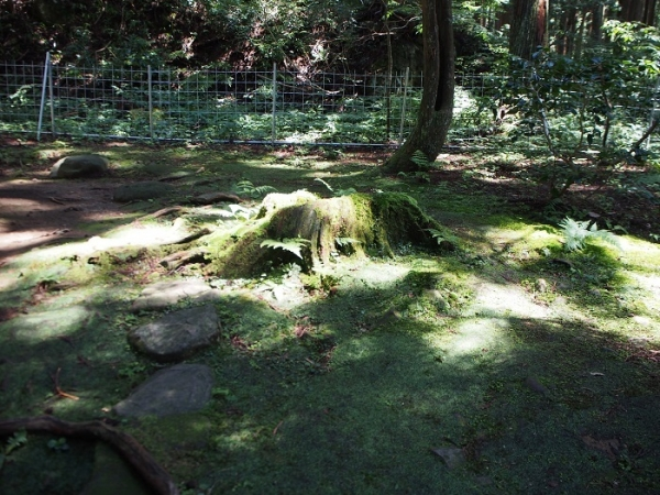 白山神社(25)