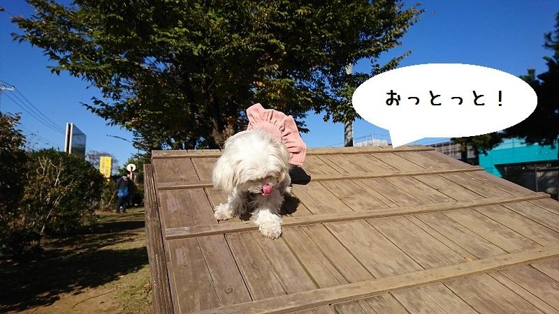 DSC_3199a.jpg