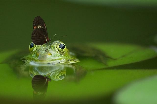 カエルと蝶々