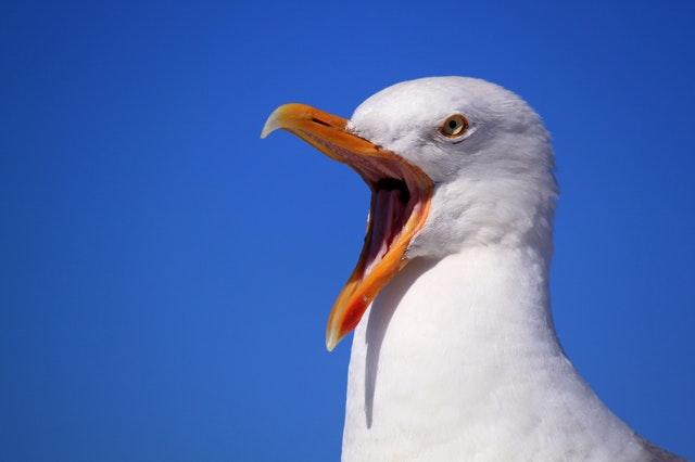 怒ってる鳥※