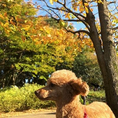 2017年11月9日光が丘公園