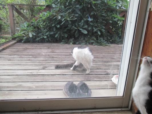 IMG_0897窓の外だれ