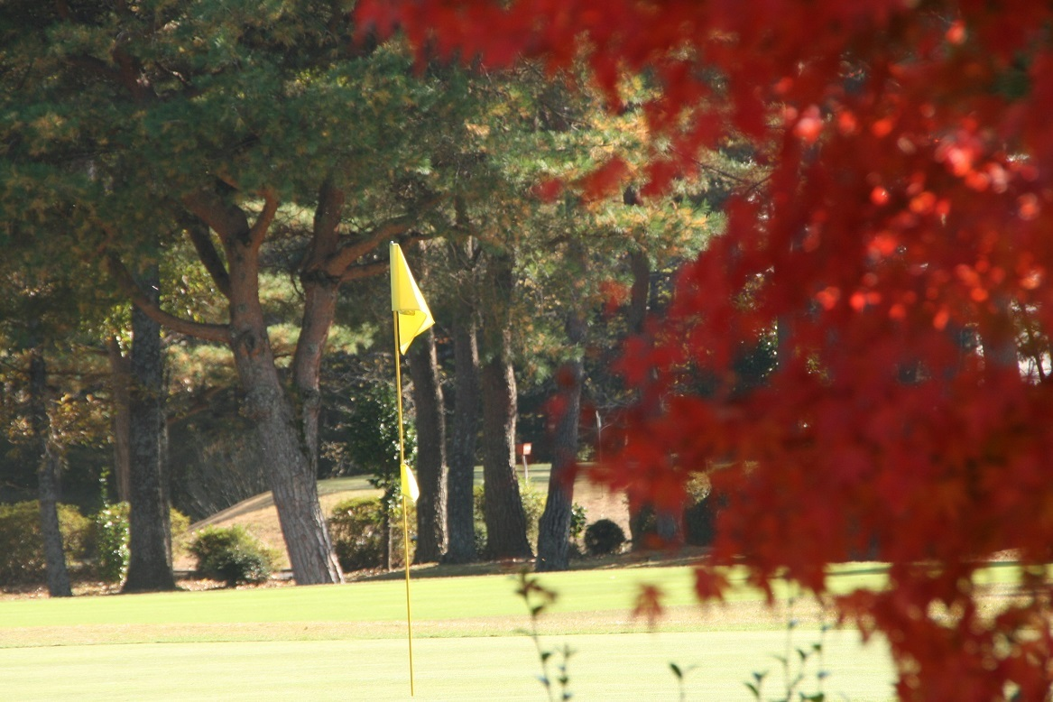 11 07 ゴルファーを待つグリーン.jpg