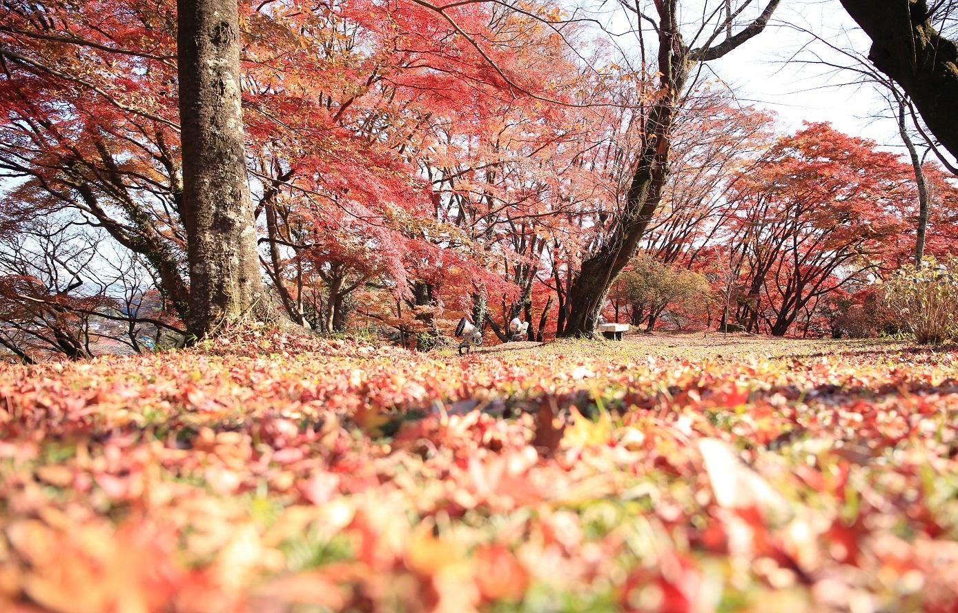 2017 11 17 ブログ 御殿山の紅葉 赤じゅうたんを踏みしめて.jpg