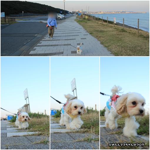 大洗散歩 11月6日①