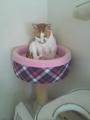 リニューアル猫タワー