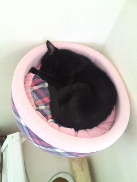猫タワーベッドのぷっちー
