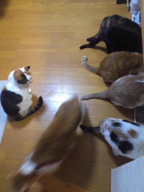猫わらわら晩ごはんタイム