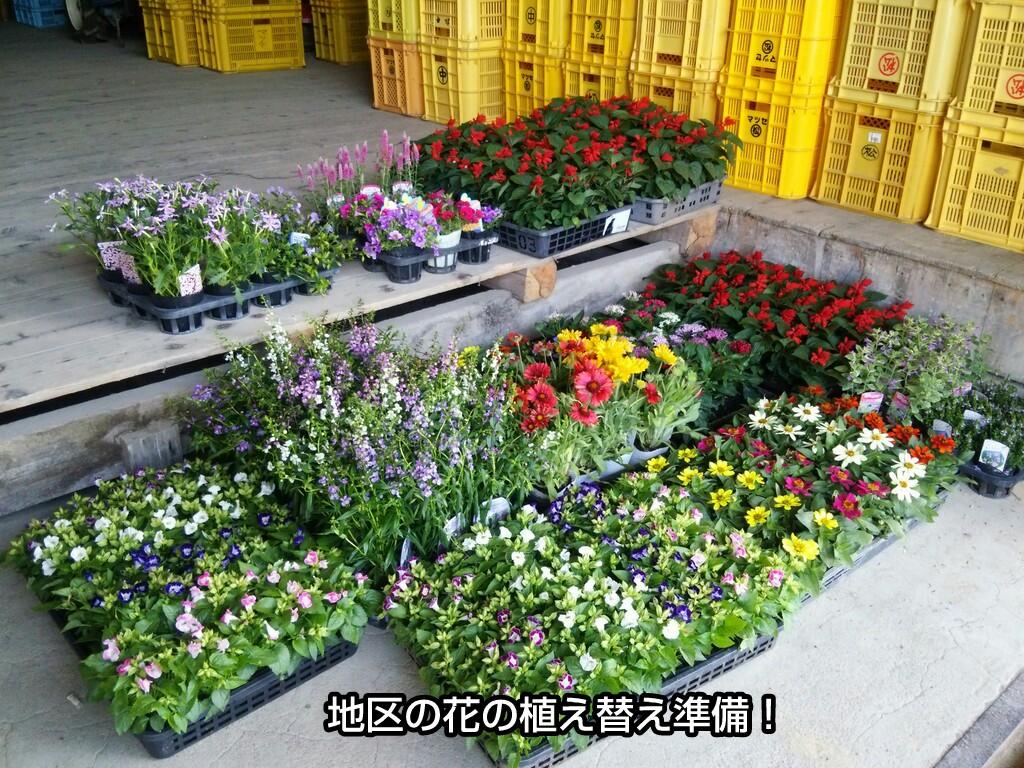 地区の花の植え替え