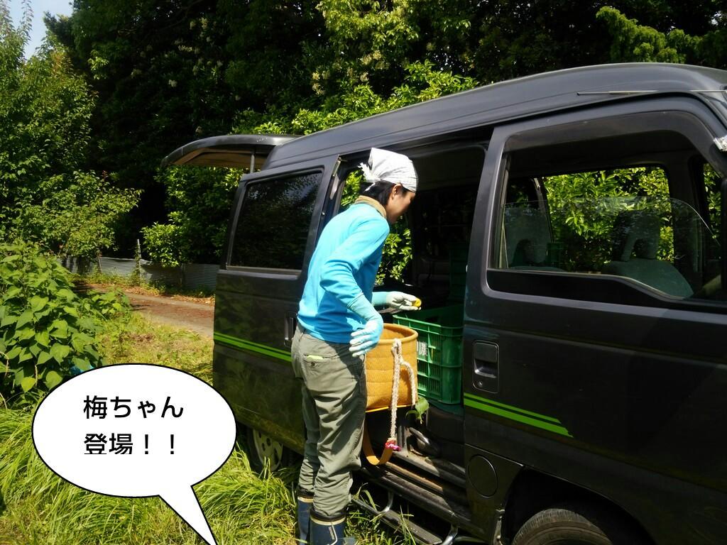 梅ちゃん登場!!
