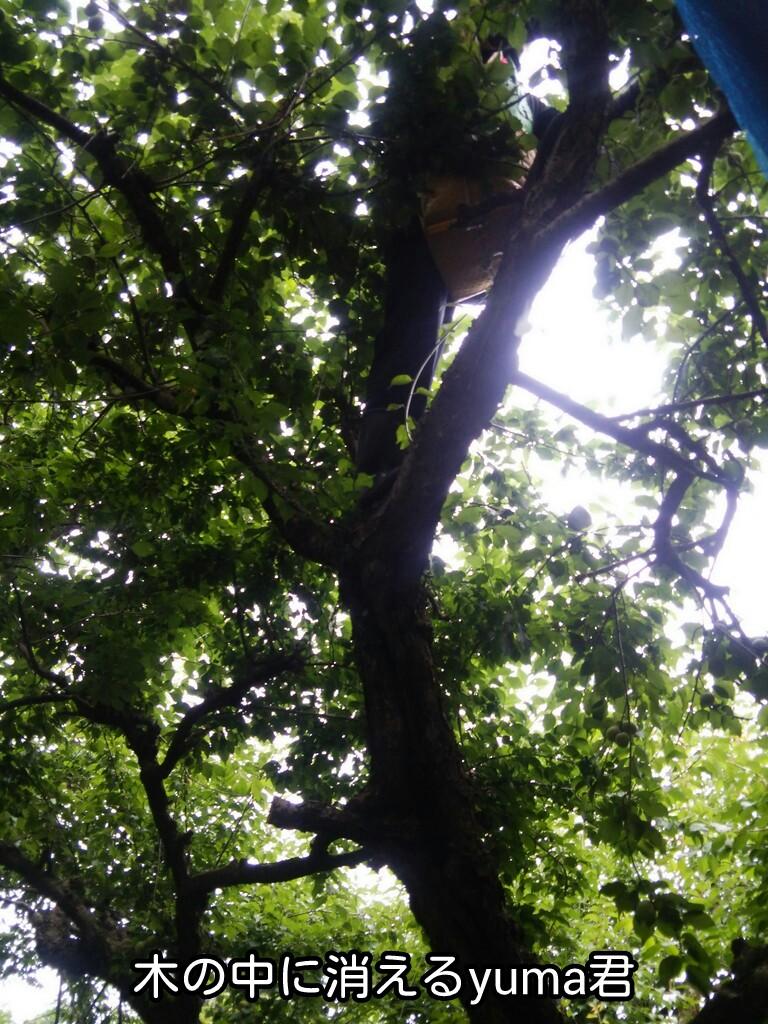 木の中に消えるyuma君