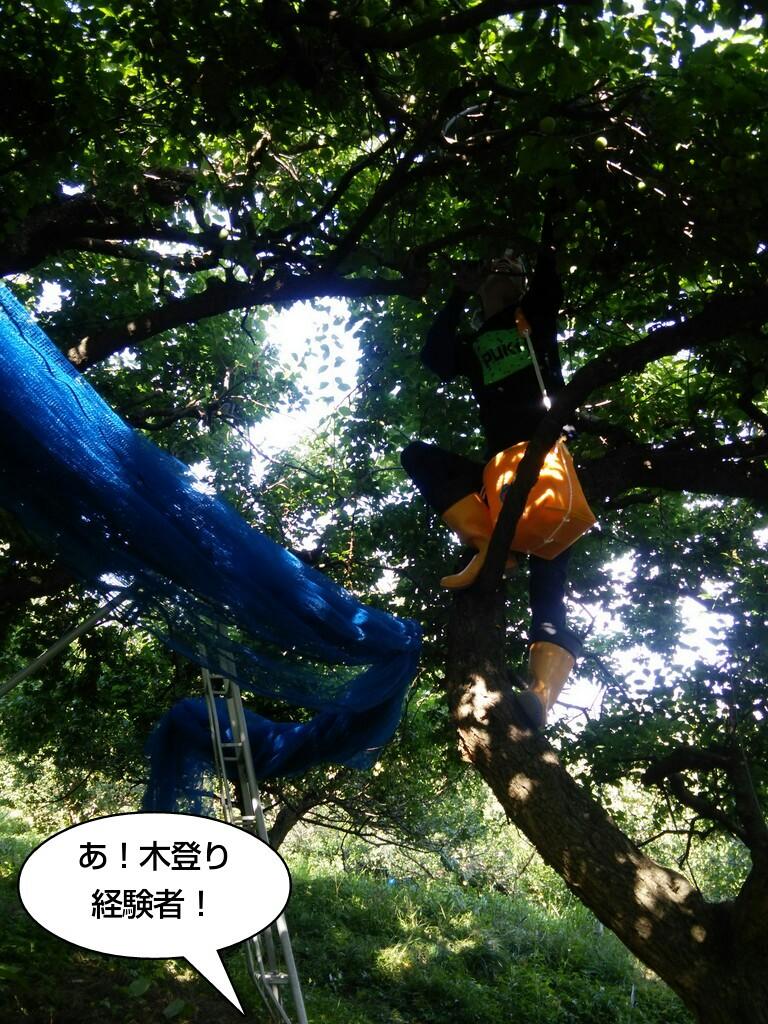 あ!木登り経験者!