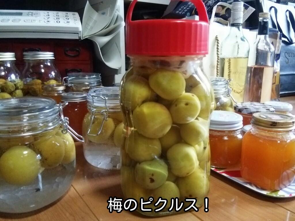 梅のピクルス