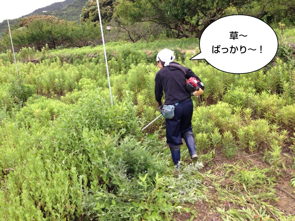 草~ばっかり~
