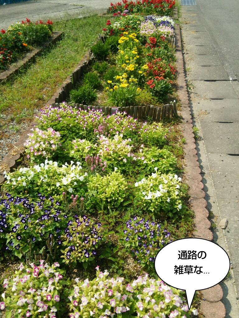 通路の雑草な