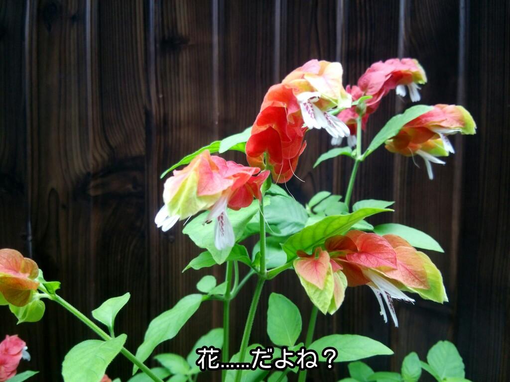 花、だよね?