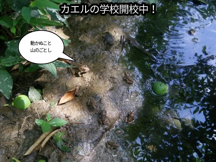 カエルの学校開校中