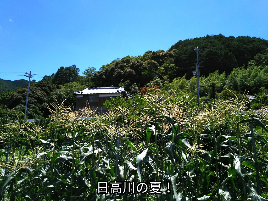 日高川の夏!