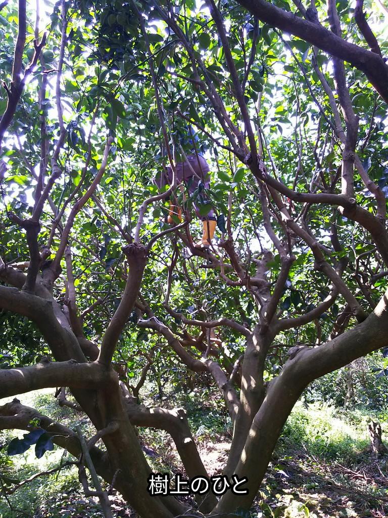 樹上のひと