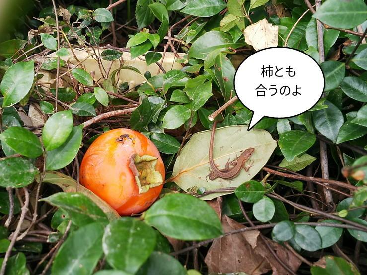 柿とも合うのよ