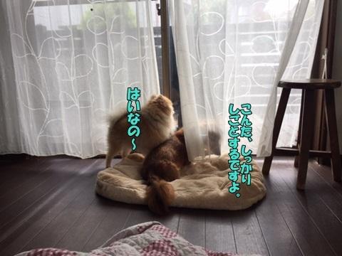 image110200101.jpg