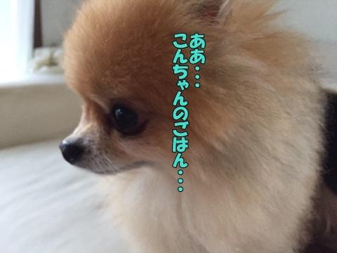image3101001.jpg