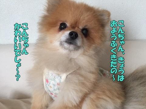 image4100201.jpg