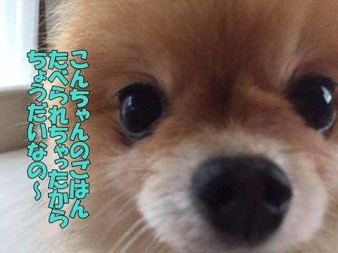 image4101001.jpg