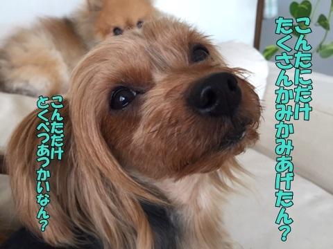 image410300101.jpg