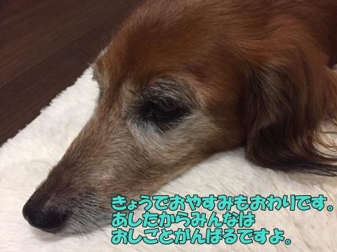 image5100901.jpg
