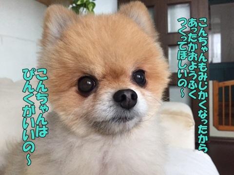 image711180203.jpg