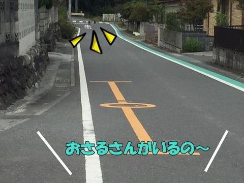 image910240101.jpg