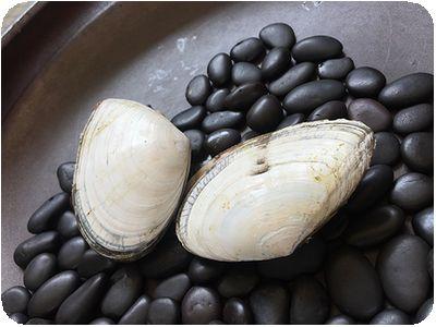 炭道備長炭海鮮焼烤貝