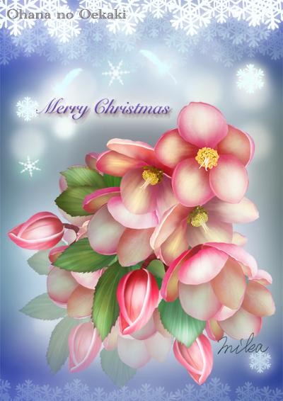 クリスマスローズ カラーバランスon