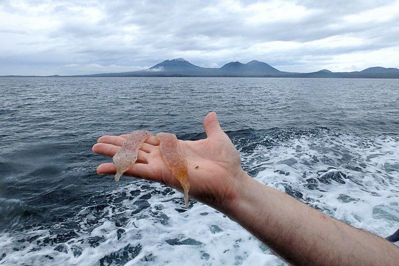 【ゼリー】アラスカの海岸に「謎の生物」が流れ着く…地元住民「福島原発事故のせいだ」で大騒ぎに