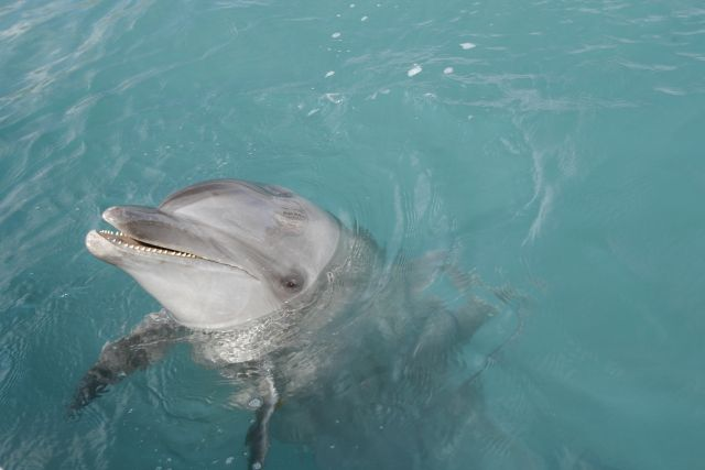 【地中海】フランス南部の海岸に3週間前から「イルカ」の打ち上げが相次ぐ…地元の海洋警察「稀な現象」